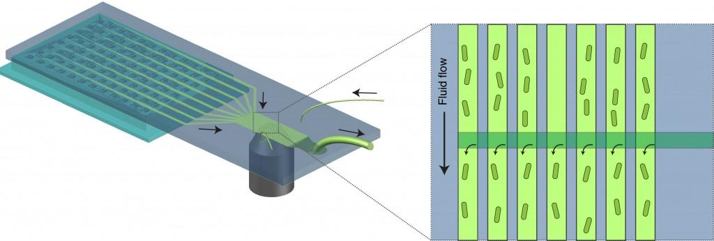 high throughput microfluidics