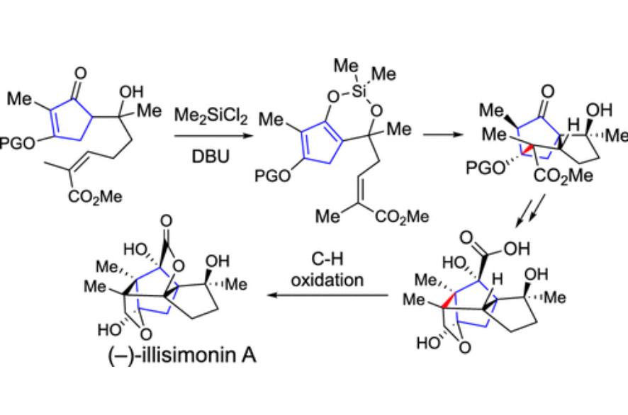illisimonin A TOC
