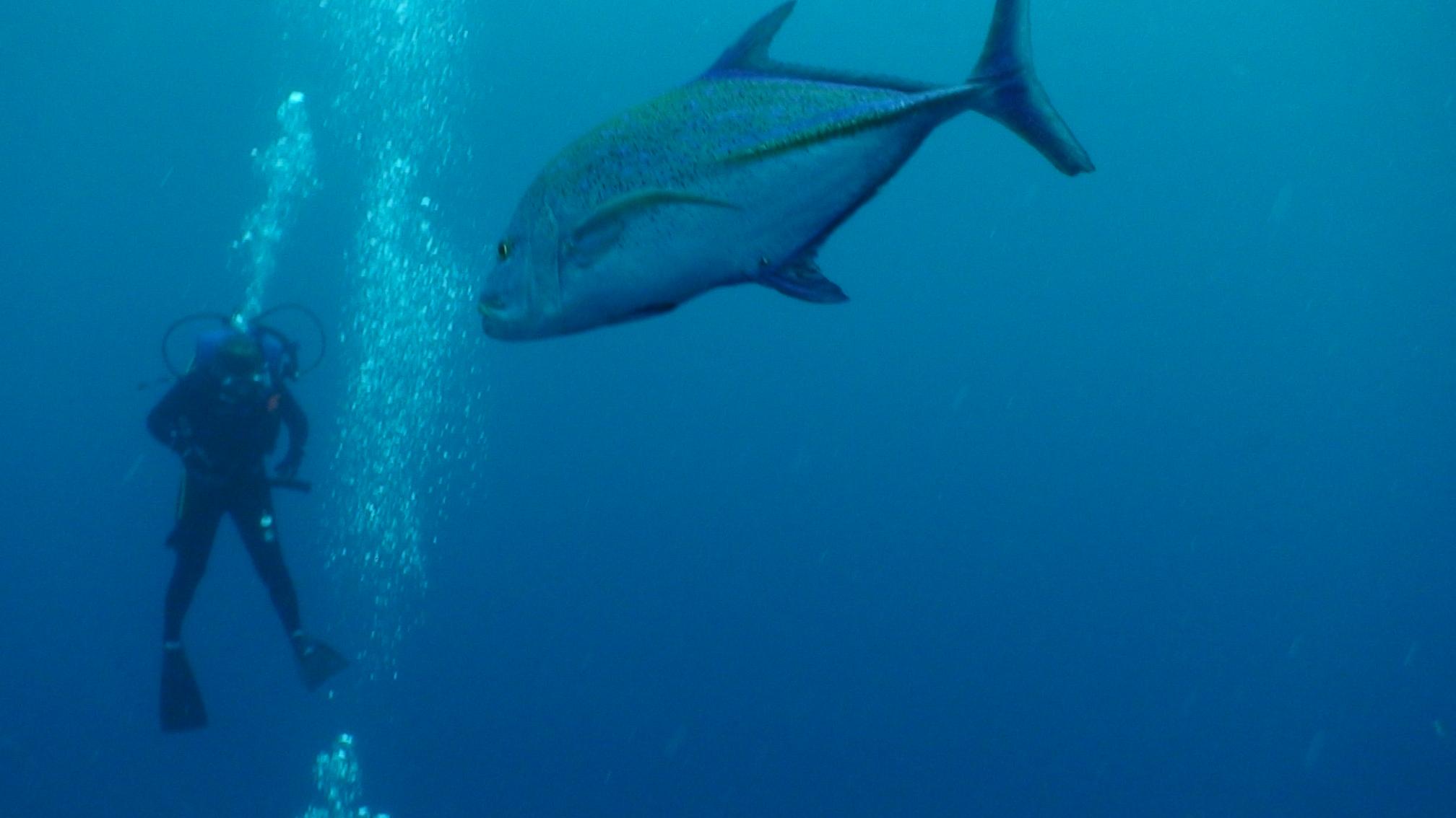 fish palmyra