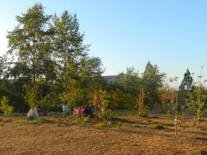 verano_orchard