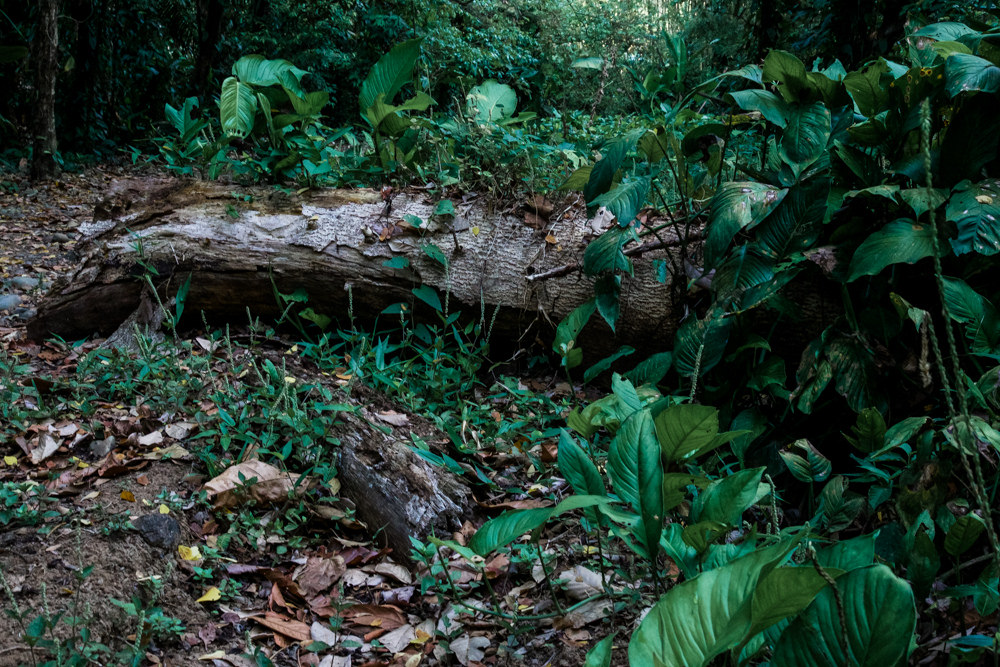A rotting log supports wildlife growth in the forest.