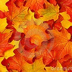 fall-leaves-13872734