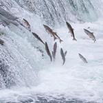 salmon falls copy