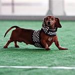 Men's Soccer, Oktoberfest, Wiener Dog Races: Sept. 29