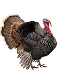 Turkey Day Holiday, Nov. 23-24