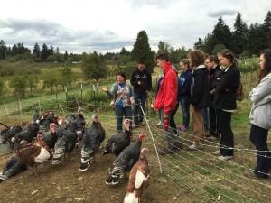 Zenger Farm turkeys