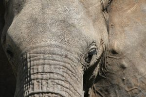 a close up of an elephants face