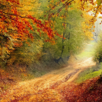 Fresh Moodle Features for Fall
