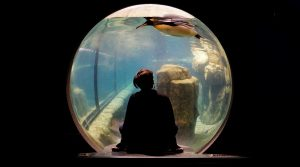 a woman looking at a penguin in an aquarium