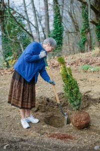 Sr.  Angela Hoffman planting yew tree, 2006 (Marketing & Communications photo, click to enlarge)